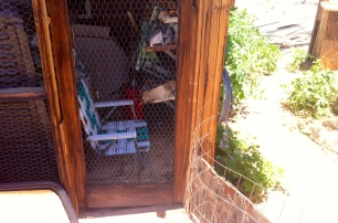 My stakeout spot, in the old pigeon pen
